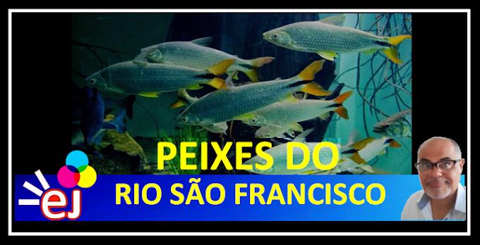 O RIO SÃO FRANCISCO E SEUS MARAVILHOSOS PEIXES (Documentário)