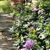 Egzotikus virágfelhők függőknek - Jeli arborétum