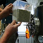 Hops proffered for a brew