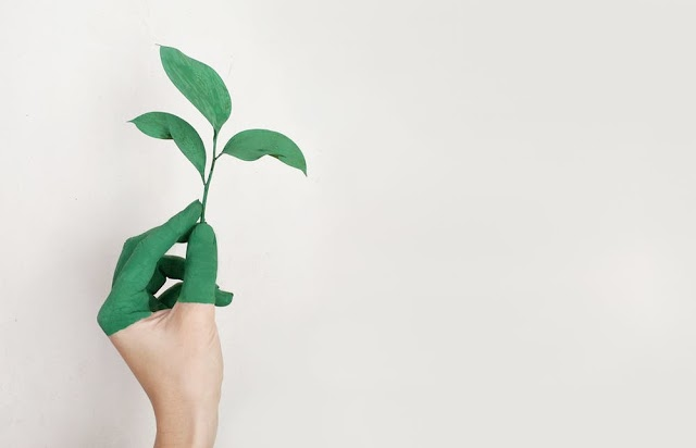 Five Easy Steps to Live More Eco-Friendly