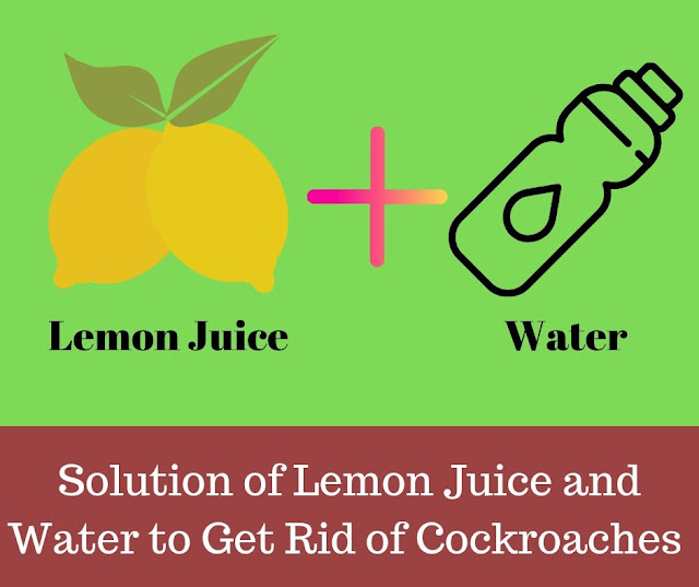 how to get rid of roaches for good with Solution of Lemon Juice and water