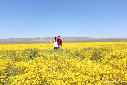 Super Bloom at Carrizo Plain | A Guest Post by Ocep