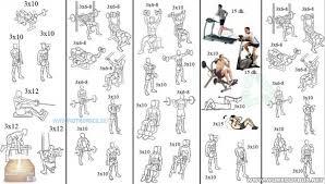Beginners Bodybuilding Program And Intermediate