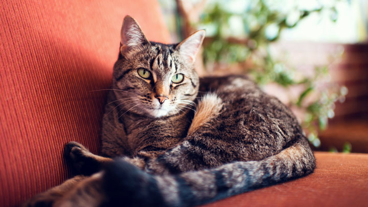 diarrhea in cats
