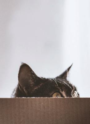 #TwistedTropes 4. Schrödinger's undead cat