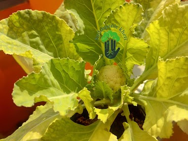 Hydroponics Garden | Hydroponic Kheti | Hydroponic Farming