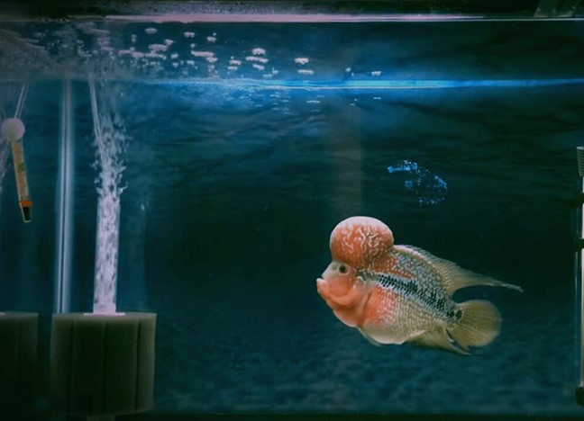 kenyamanan ikan