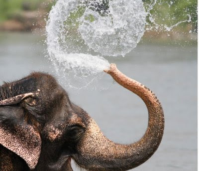 Elephant bathing into the river. perfect timed photo of animals