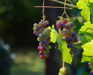 Grapes in Hindi