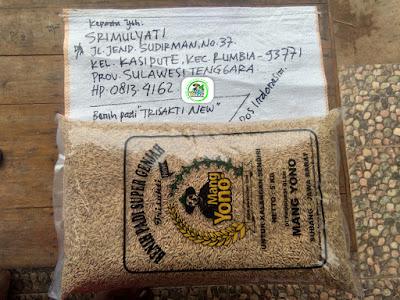 Benih padi yang dibeli   SRIMULYATI Bombana, Sulteng.  (Sebelum packing karung).