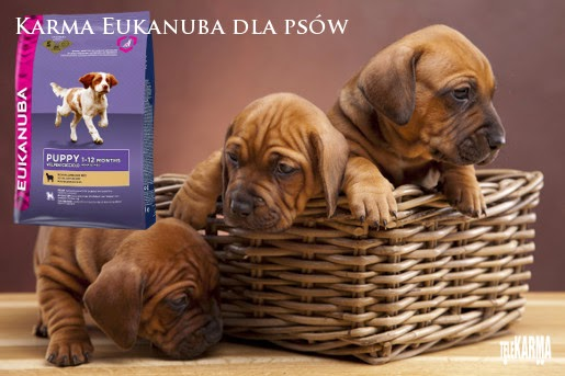 Nowe opakowania karm Eukanuba dla psów