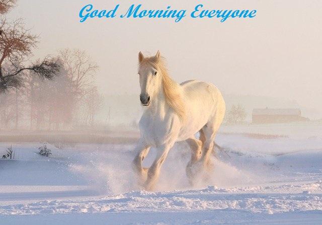 good morning photos nature