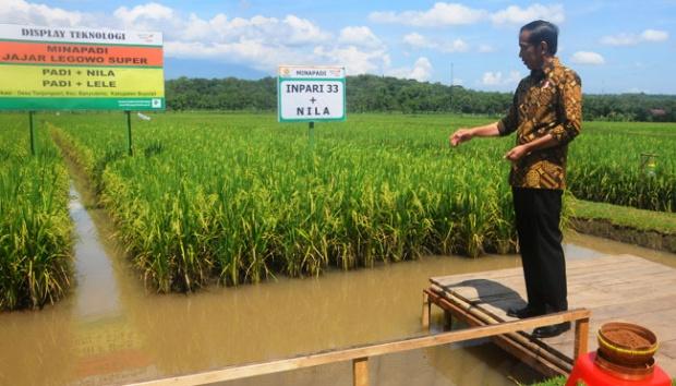 Jokowi Akan Jadikan Kalimantan Tengah Lokasi Pertanian Modern
