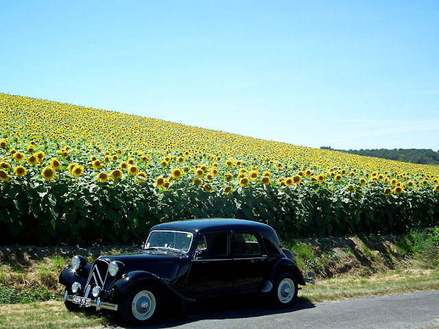 Sunflowers and Citroen Traction Avant. Touraine Loire Valley. France. Photo by Susan Walter.
