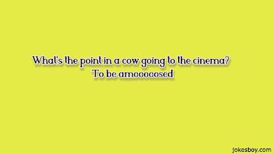 funny cow jokes