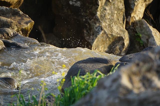 נחל עורבים זורם בין סלעים