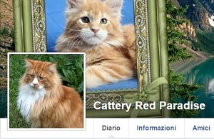 Red Maine Coon Cattery