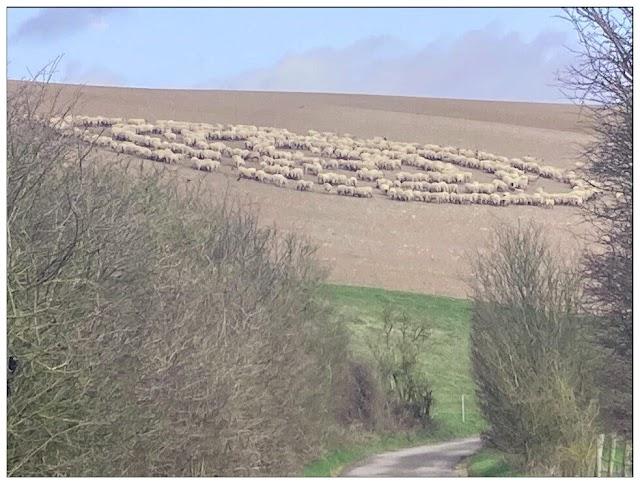 Μυστήριο με πρόβατα που κάθονται σε ομόκεντρους κύκλους