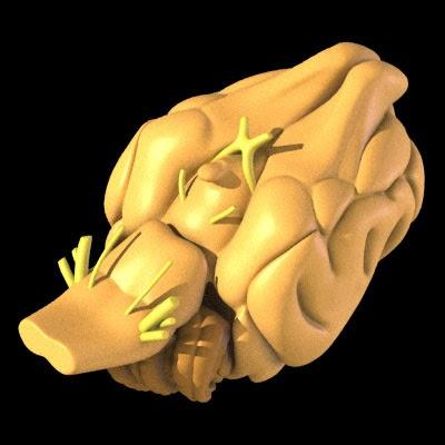 neurologia-veterinaria-vetarq