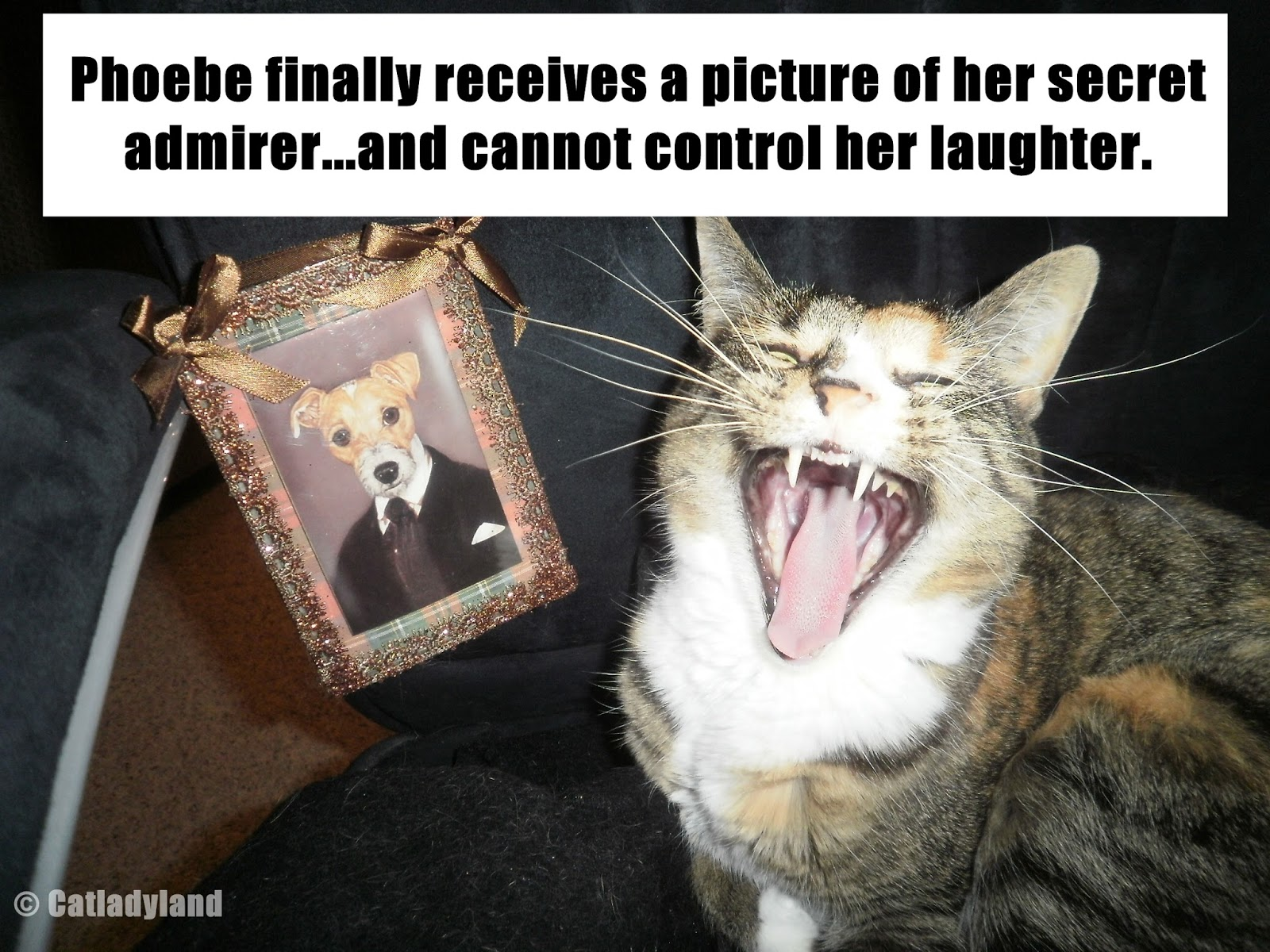 funny looking cats and dogs - photo #31