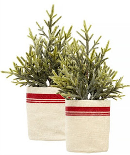 pine trees with red and white burlap bases