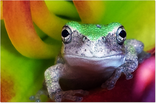 Frog photography