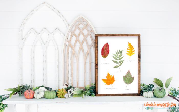 Fall Leaf Study