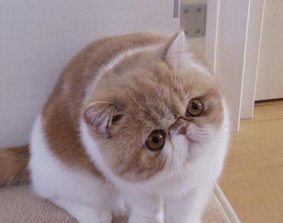 Gambaran kucing garfield asli