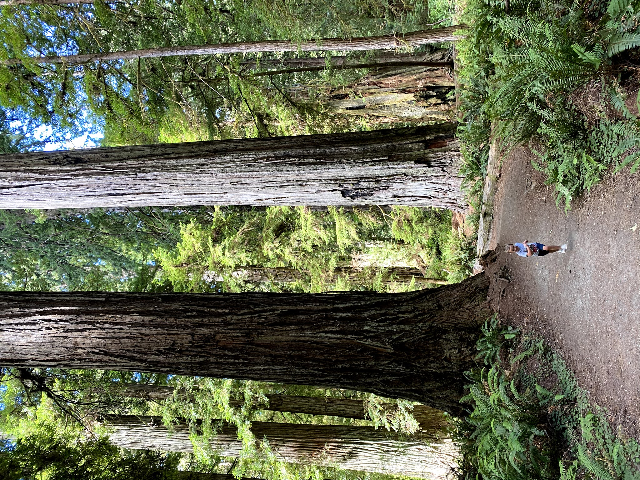 Redwoods National Forest | biblio-style.com