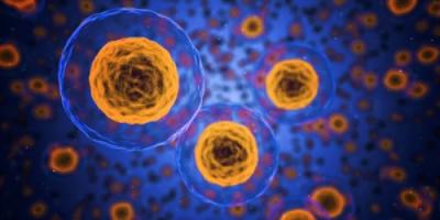 خلايا جهاز المناعة