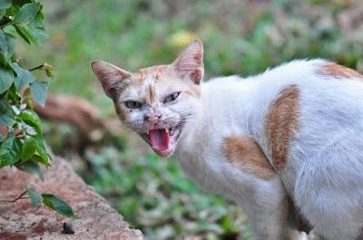 Cara Mengusir Kucing Liar dari Rumah