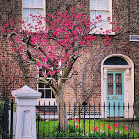 Images of Dublin doors: Blue door with pink tree