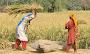 Crop Cultivation On Problem Soils In Pakistan