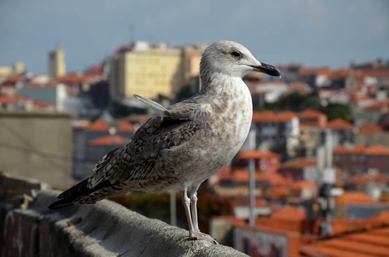 Porto, Portugalia, Riberia, wyjazd do Porto, Porto wskazówki, Ribeira, Matosinhos, Douro, azulejos, Francesinha, pastel de Nata, lello, zwiedzanie praktyczne wskazówki