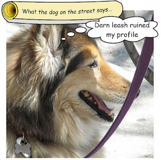 http://dogsarefun.club/2016/08/25/dog-on-the-street-has-an-eye-for-the-camera/
