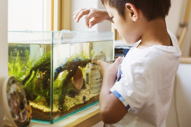 Cara Merawat Ikan Hias untuk Pemula Agar Awet