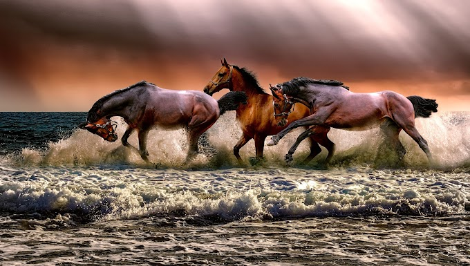 Amazing Horse Pics | Horse images