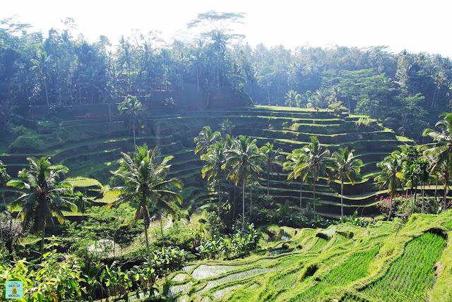 Arrozales de Tegallalang, Bali