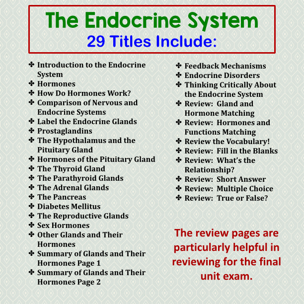 The endocrine System answer Key