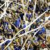 Confiança vai estrear na Copa do Nordeste contra o Santa Cruz, confira os jogos!