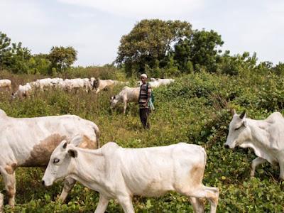 RUGA Fed Govt's ploy to grab land for herdsmen, CRC-N alleges