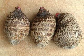 NatureFitness: Vegetable COLOCASIA in Telugu Language