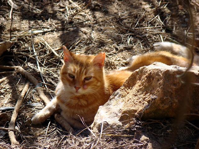 Koty wgórza Montjuïc