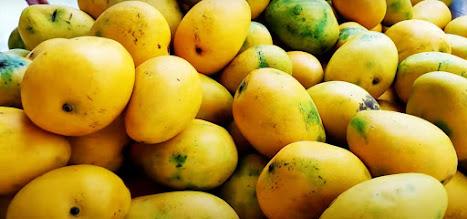 about mango in hindi 10 sentences