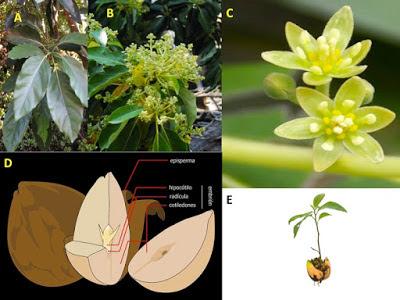 Flores unisexual ejemplos de curriculum