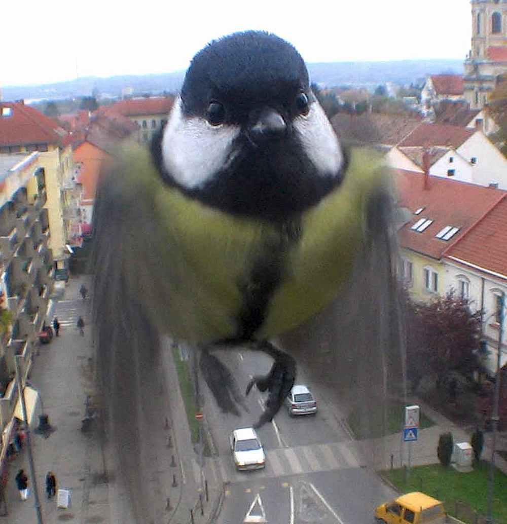 unusual bird photograph