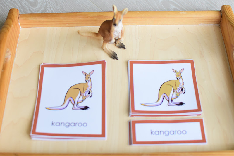 Oceania CONTINENT Study: PARTS OF KANGAROO AND PLATYPUS