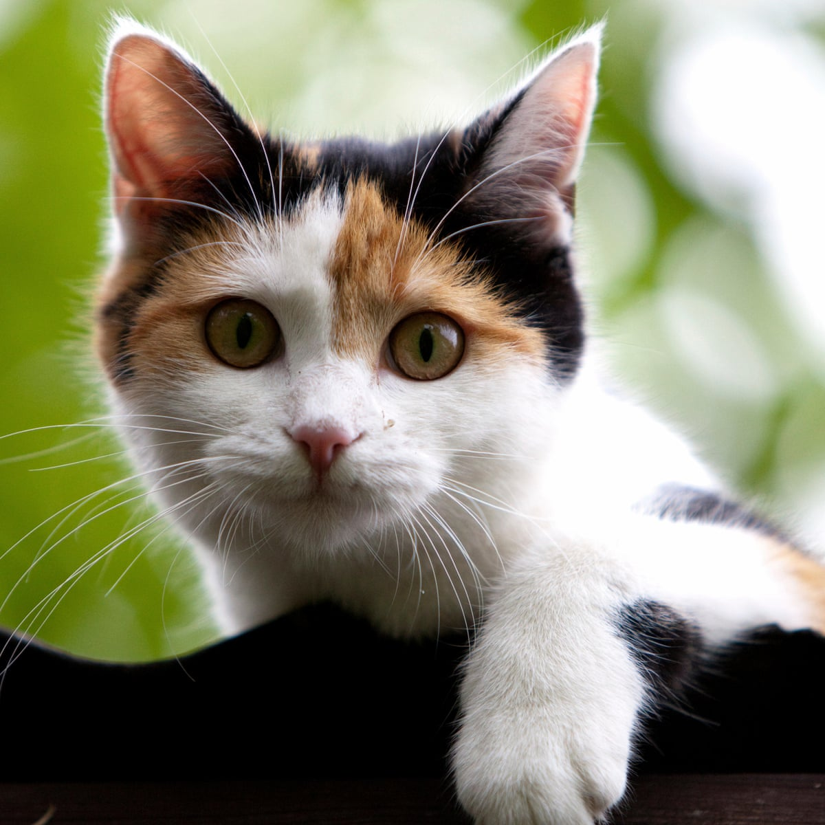 kedim kabız oldu