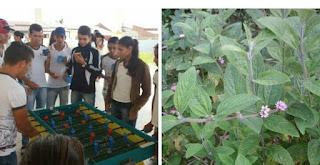Escola inova e serve chá para ajudar aquecer o frio em Baraúna