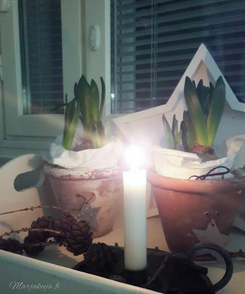 joulunodotus asetelma hyasintti kynttilä